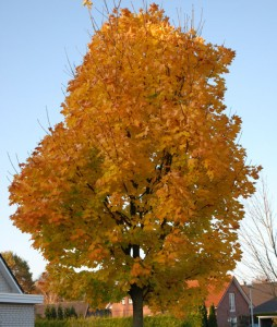 Der Herbst hat ganze Arbeit getan: Alle Blätter sind verfärbt.