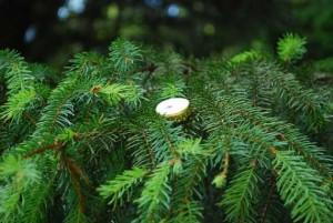 So ein Kronkorken ersetzt locker die Christbaumkugeln