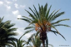 Im Urlaub Palmen fotografieren