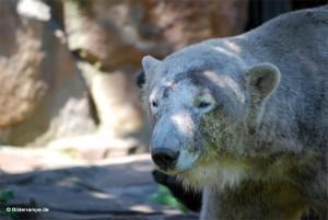 Tschüß Knut.