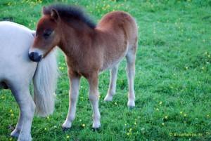 Pony sucht Nähe