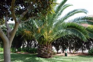 Palme im sommerlichen Garten
