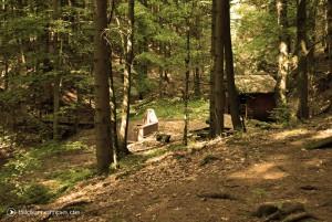 Im Stadtwald von Ellrich