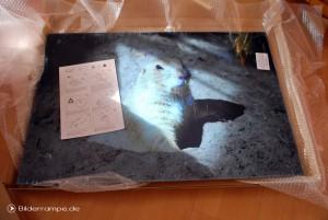 Acrylglasfoto mit Schutzfolie und Beschreibung