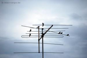 Vögel sitzen auf einer Antenne