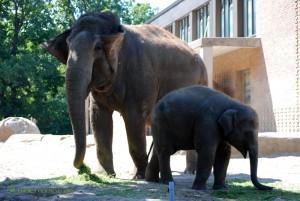 Ein kleiner und ein großer Elefant