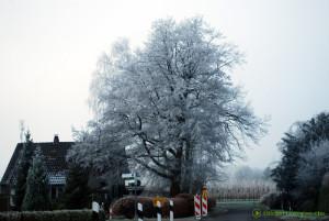 Vereister Baum
