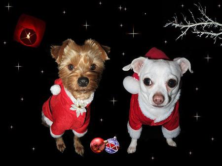 Weihnachtskarte mit Fotos der Familienhunde | Foto: pixabay.com, CC0 Public Domain